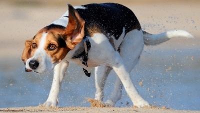 El golpe de calor en las mascotas