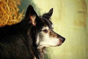 dog-2043869_1920